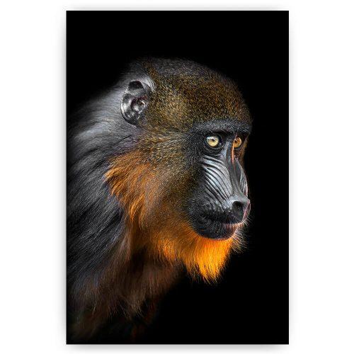 poster mandril aap
