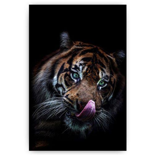 tijger op zwart