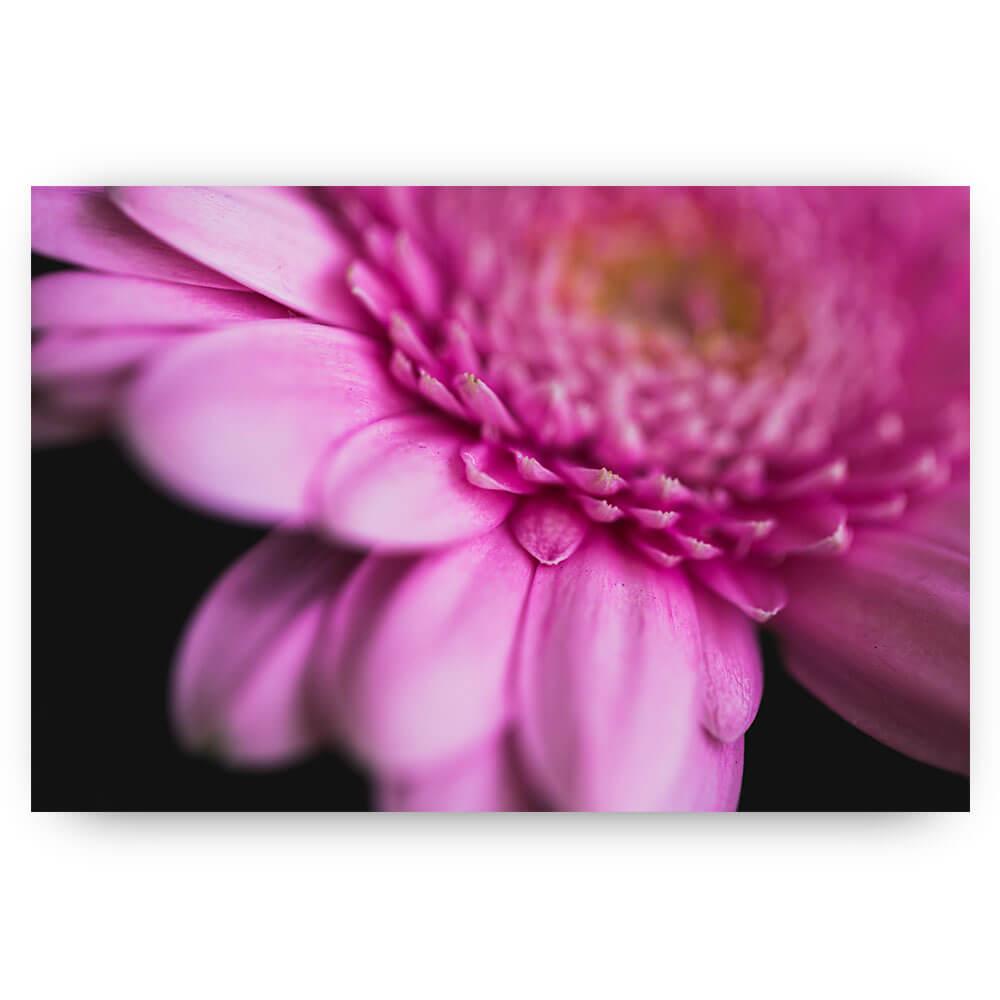 Macro roze bloem
