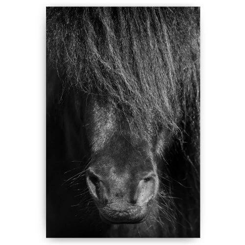 Zwart paard close-up