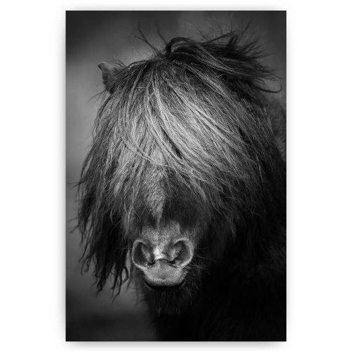 Pony zwart wit