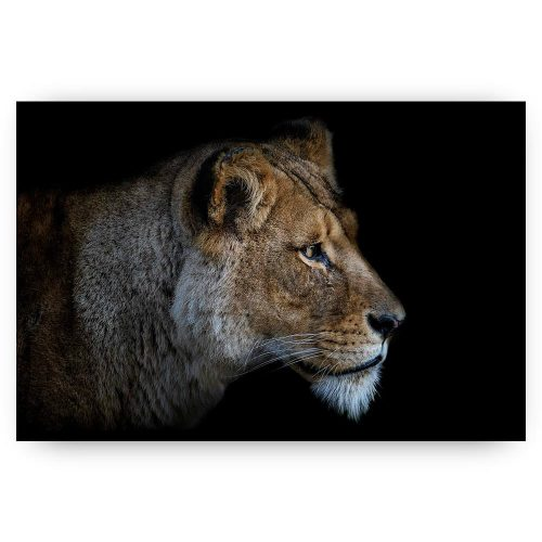 portret leeuwin