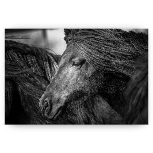 shetlandpony paard zwart wit