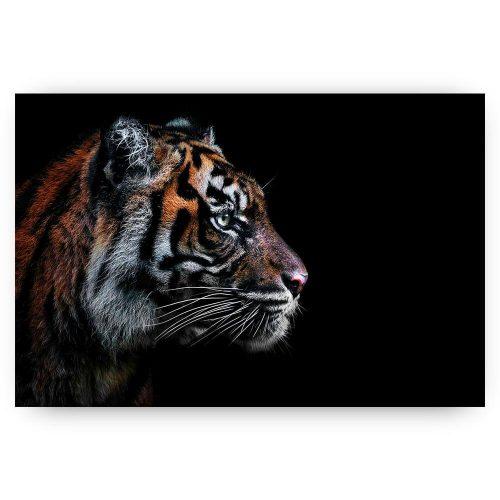 tijger zijkant profiel op zwart