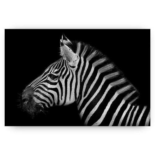 zebra zwart wit portret