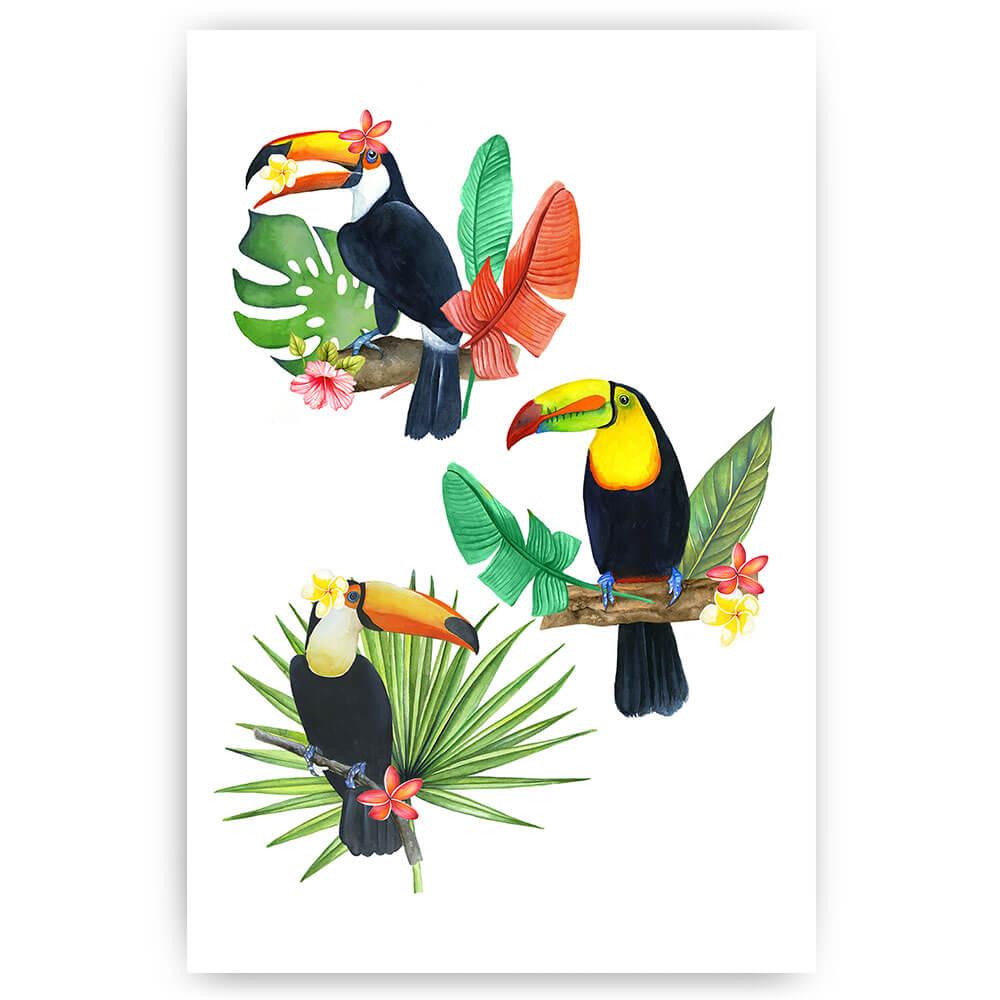 kleurrijke toekan vogels illustratie