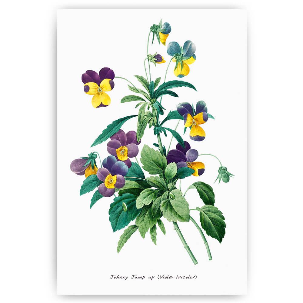 paarse viooltjes bloemen