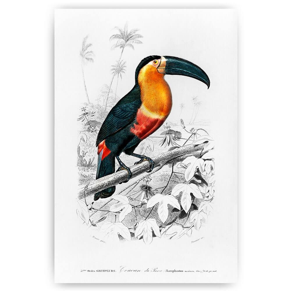 toekan vogel illustratie