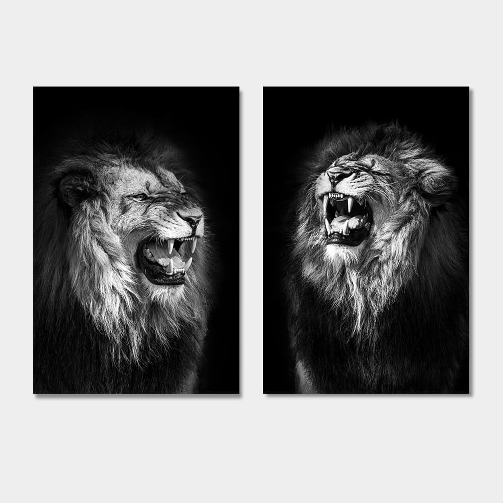 brullende leeuwen zwart wit