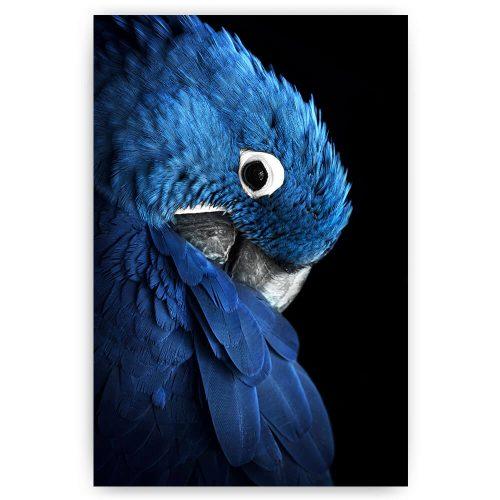 blauwe papegaai