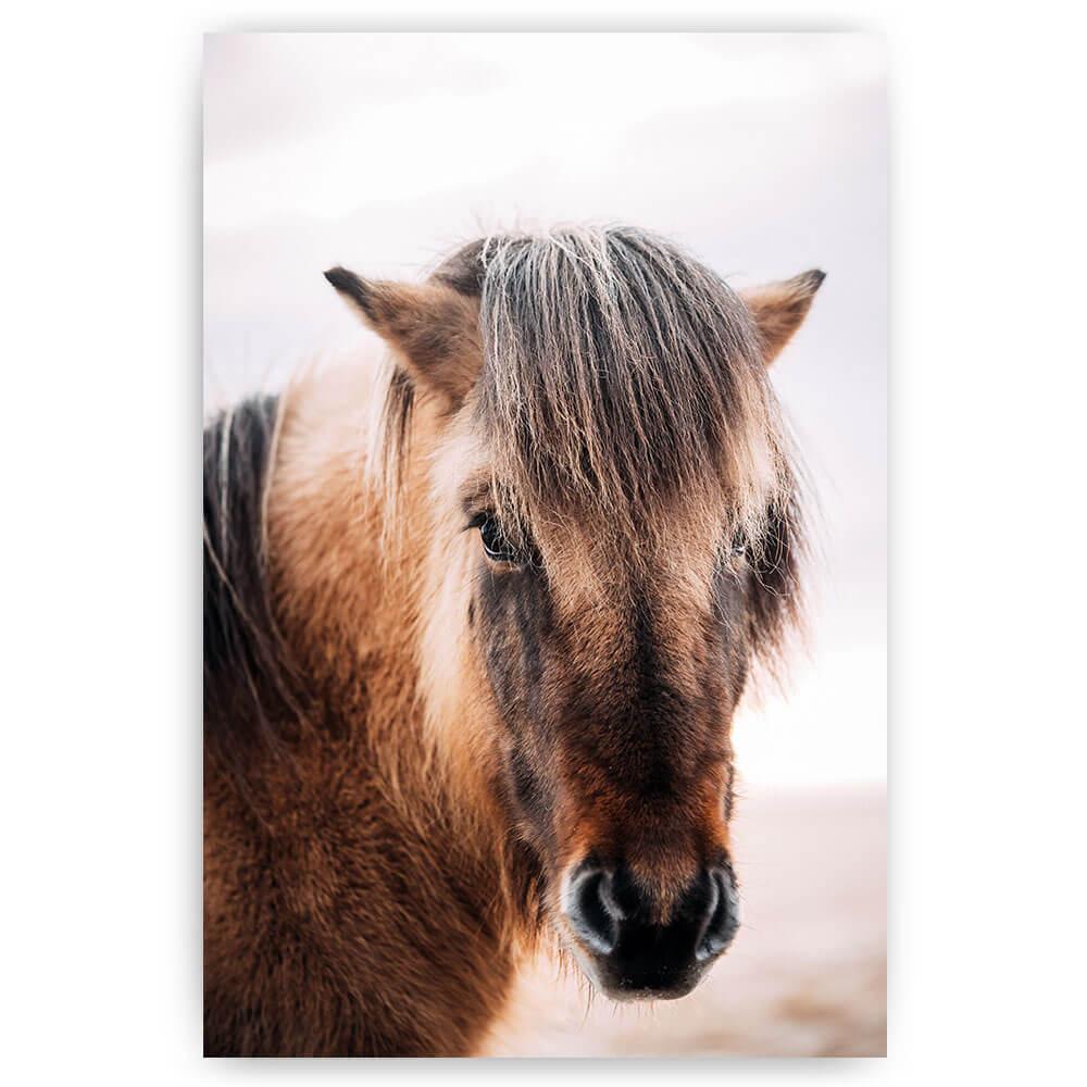 bruin paard met lange manen