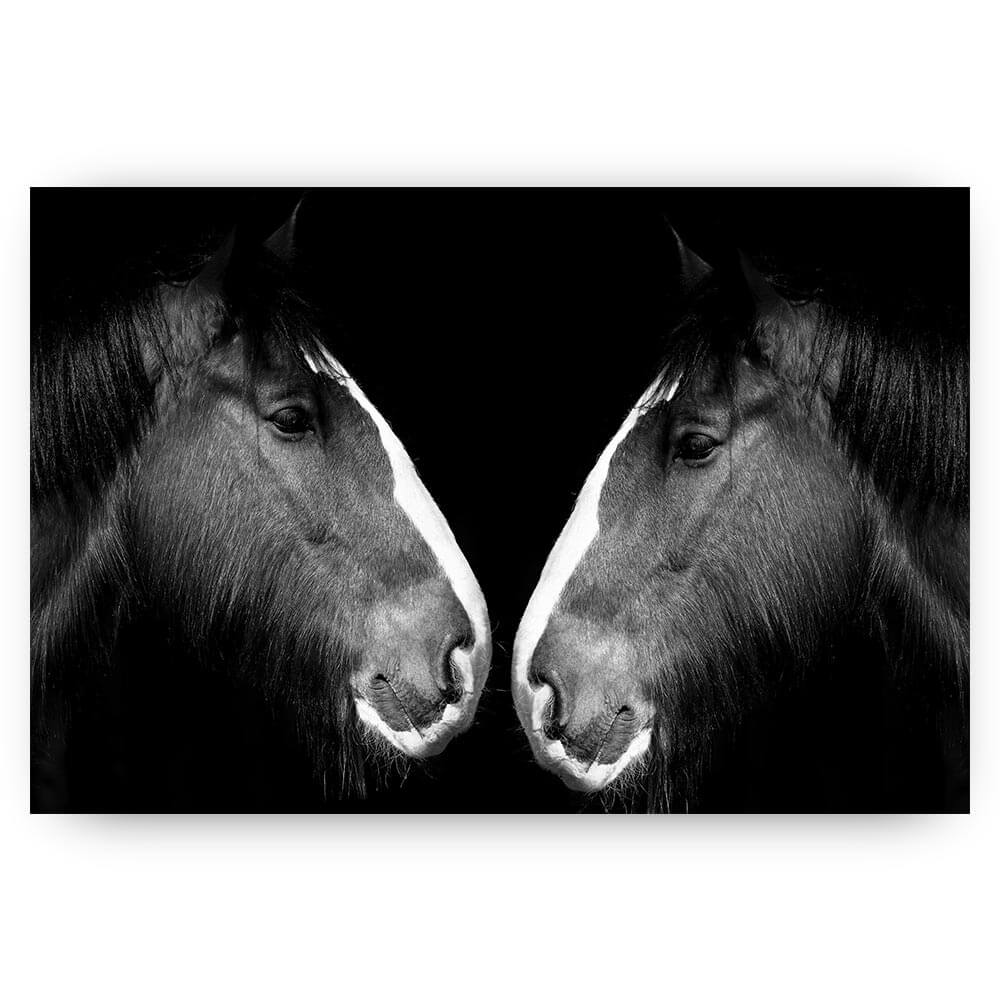 zwart wit paarden