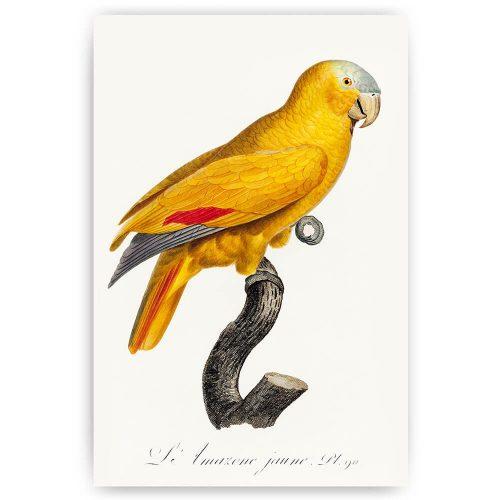 klassieke gele papegaai