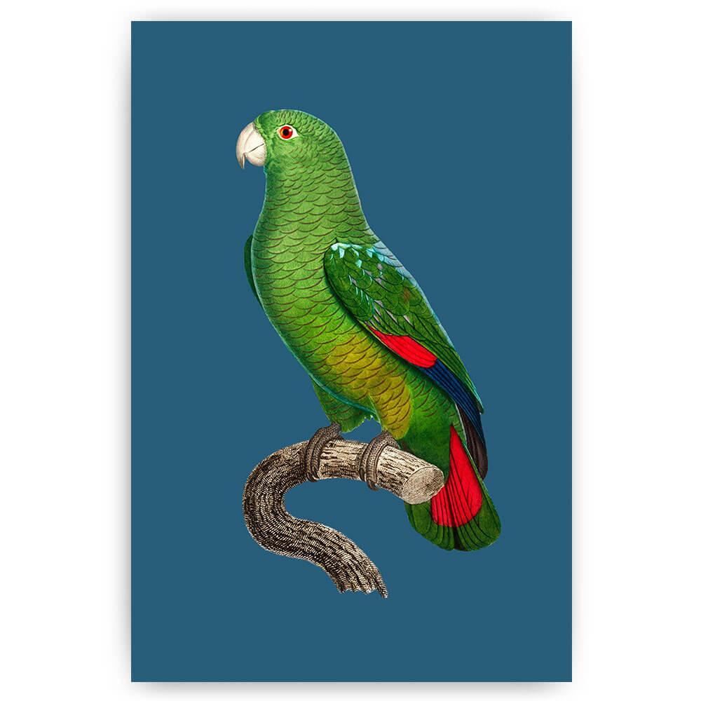 vintage papegaai