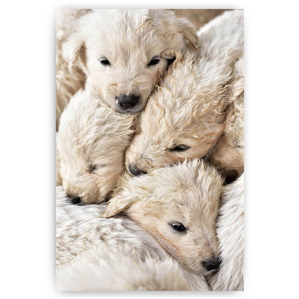 honden puppies