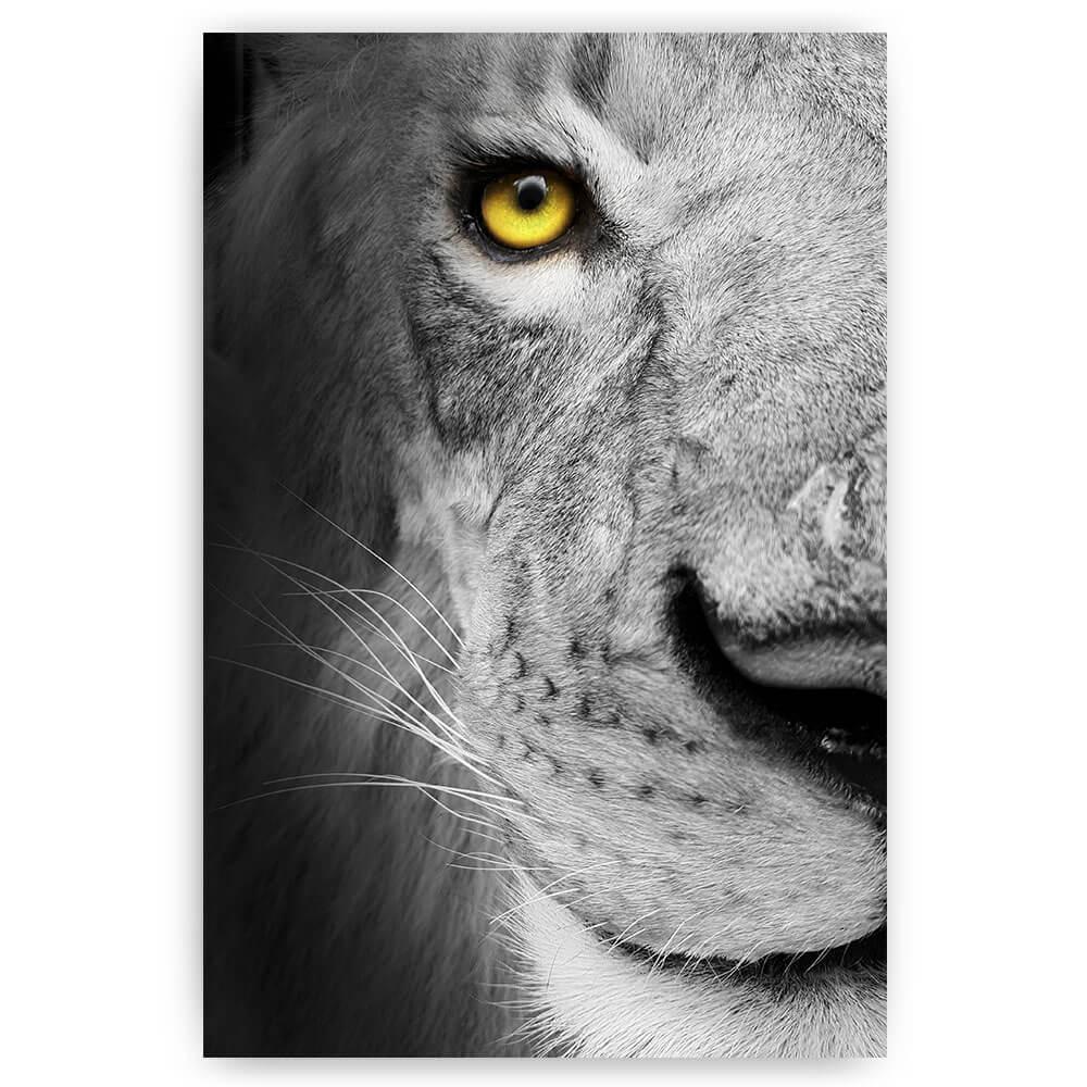 leeuw close up oog