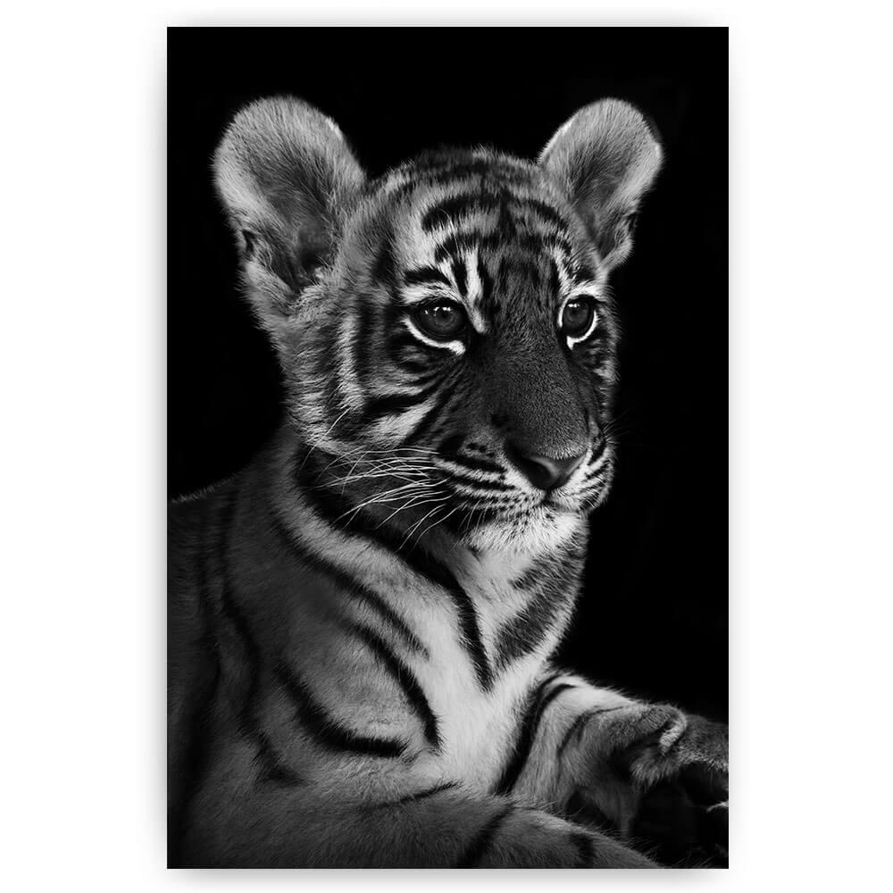 liggend tijger welp zwart wit