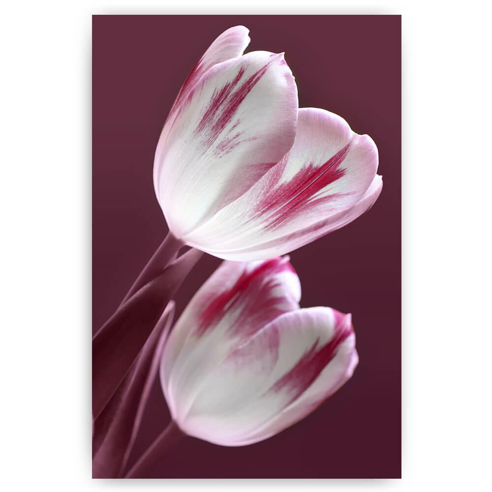 paarse tulpen bloemen