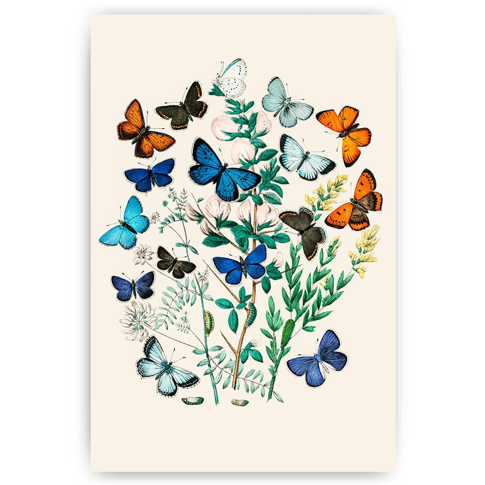 vlinders in struik