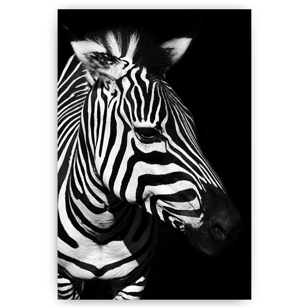 zebra kop op zwart