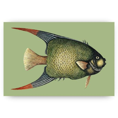 zwevende vis illustratie