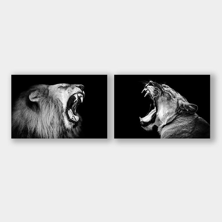 brullende leeuw leeuwin