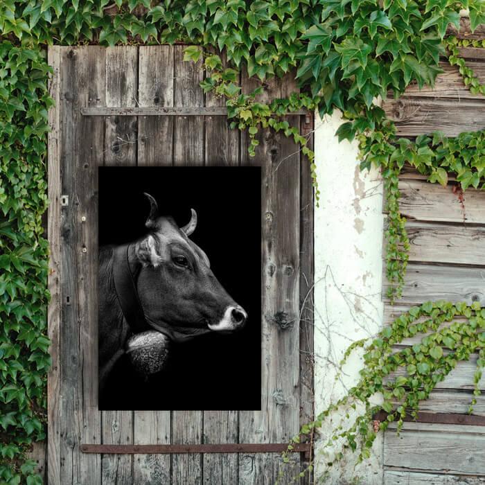 tuinposter koe zwart wit