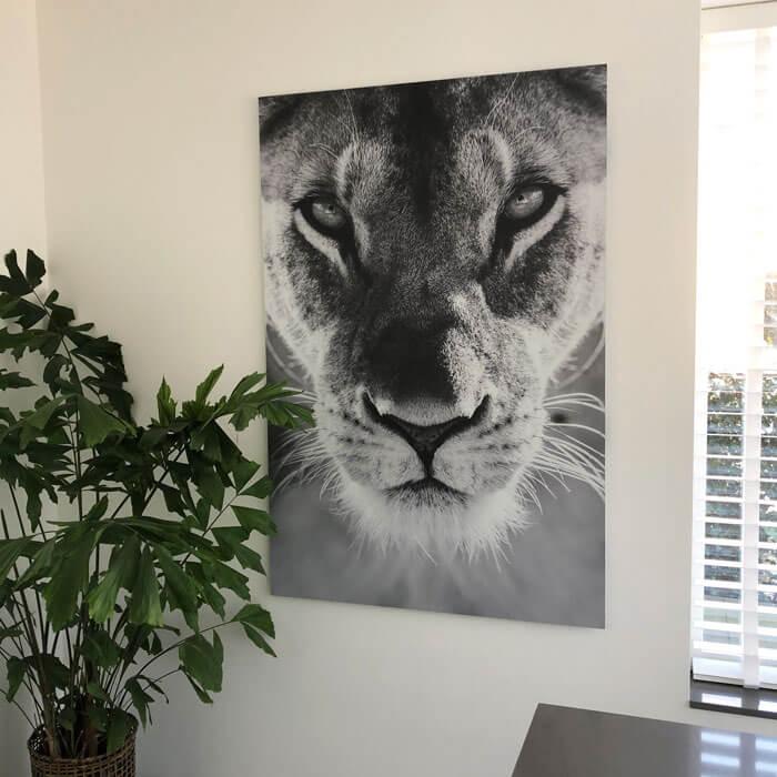 leeuwin kop wachtkamer