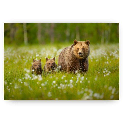 beren familie