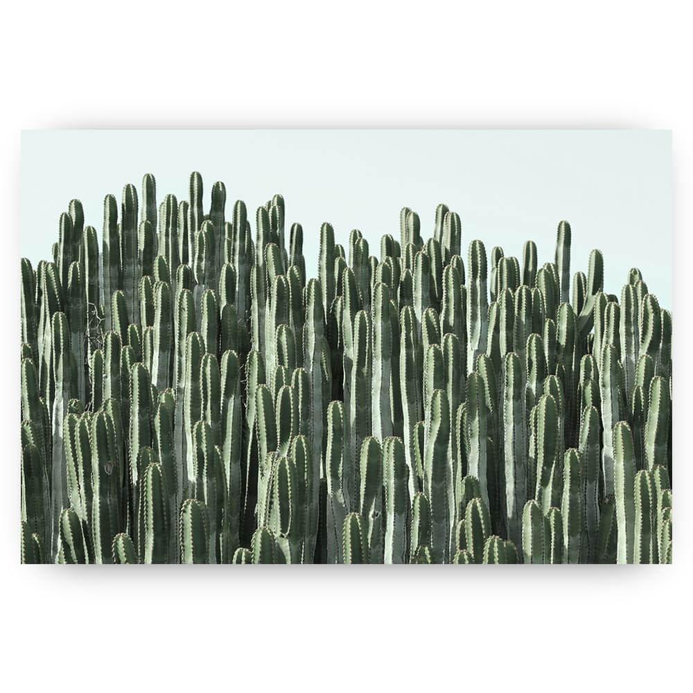 haa van cactussen