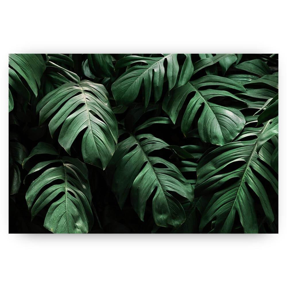 hangende tropische bladeren