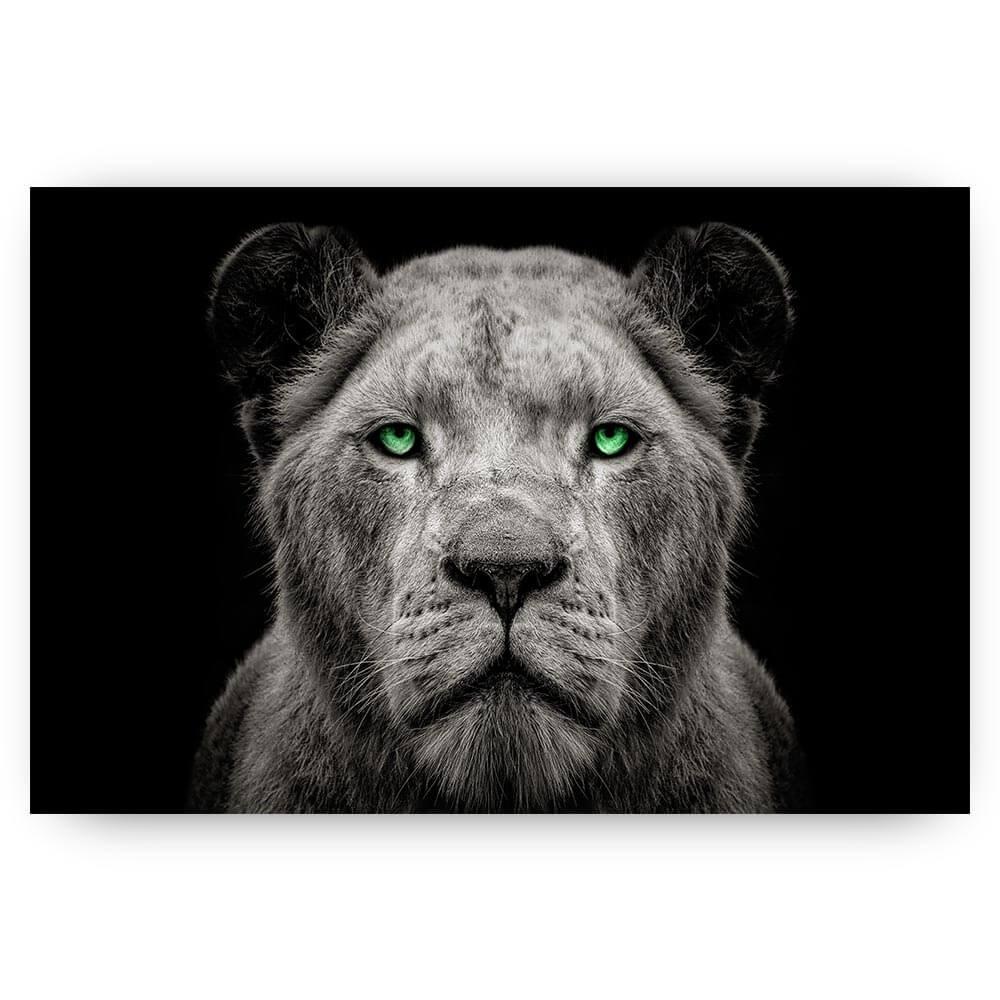 leeuwin met groene ogen