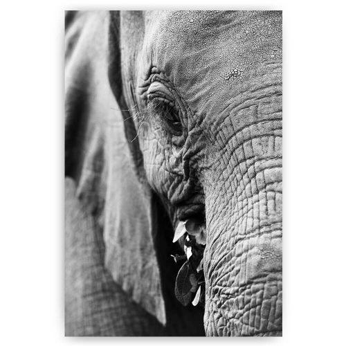 olifant zwart wit