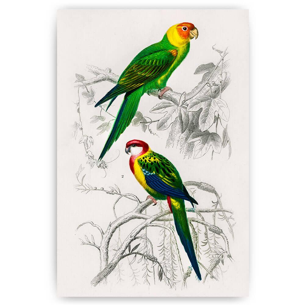 twee kleurrijke vintage papegaaien