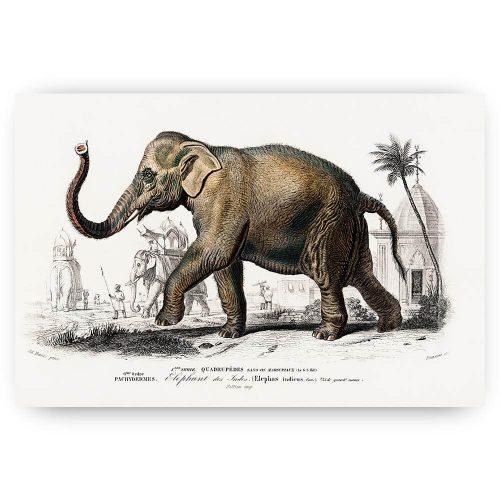 vintage getekende olifant