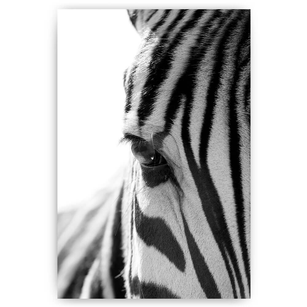 zebra close-up oog