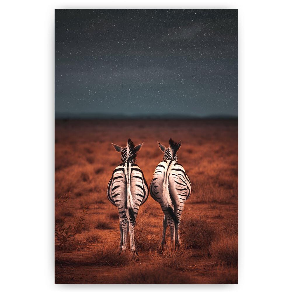 zebra's onder sterrenhemel