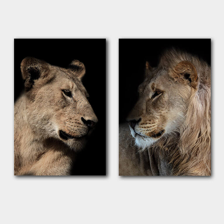 leeuw leeuwin duo kleur