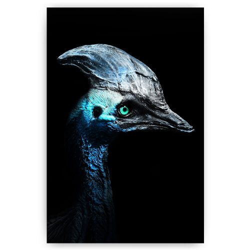 cassowary vogel op zwart