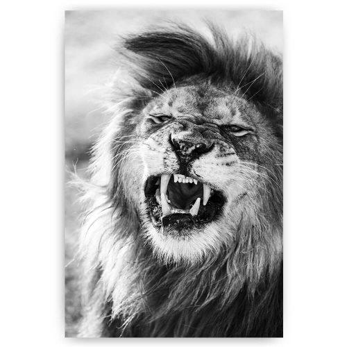 kwijlende leeuw