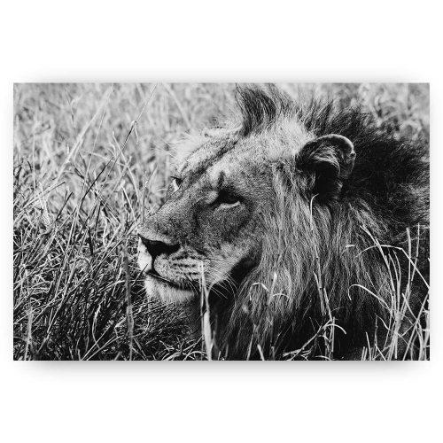 leeuw in hoog gras