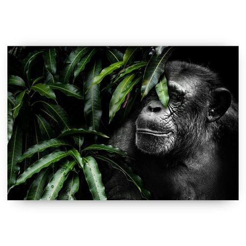 verscholen aap tussen bladeren