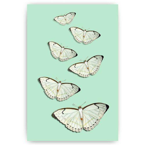 witte vlinders poster schilderij