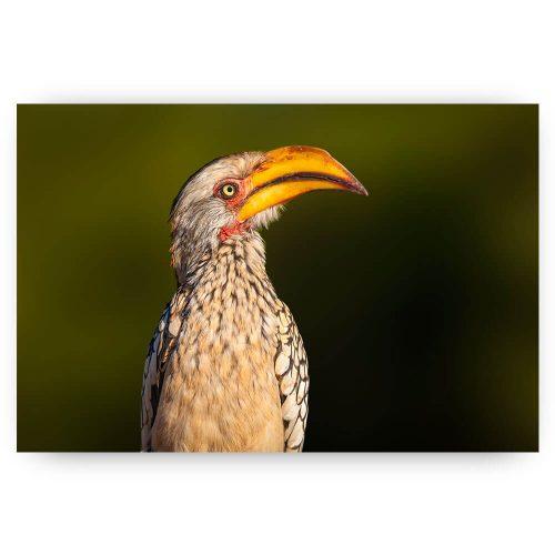 Poster neushoorvogel
