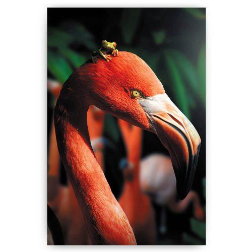 Flamingo met kikker op kop