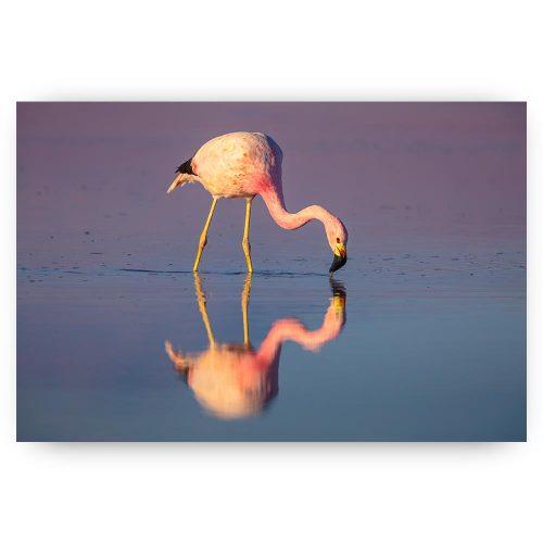 flamingo in water