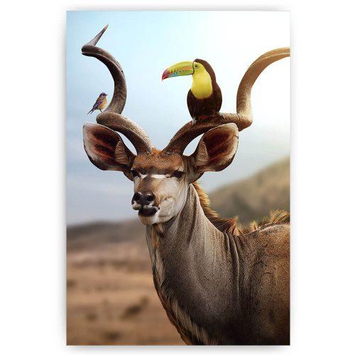 Kudu met toekan