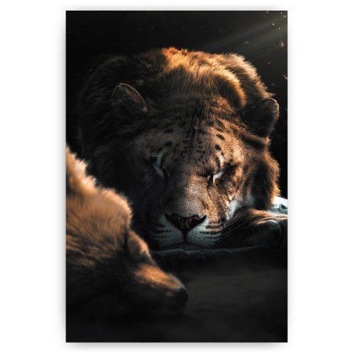 slapende leeuw en vis