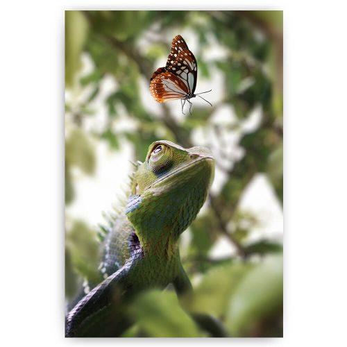 kameleon met vlinder