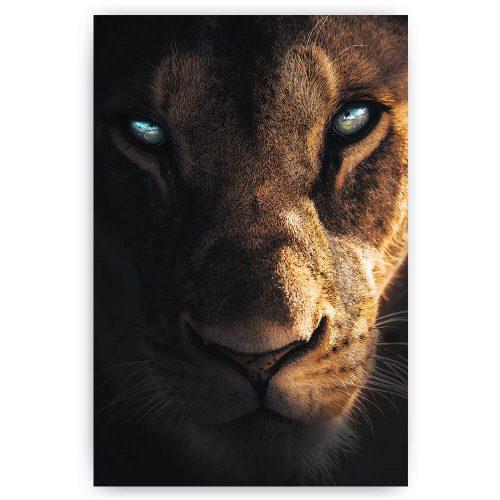 leeuwin indringende ogen